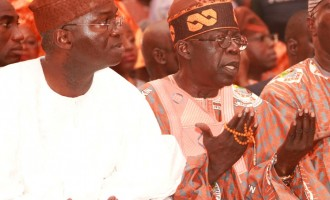 Fashola, Tinubu and the pigs