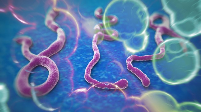 Port Harcourt Ebola victim dies