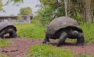 World's biggest Tortoise can live up to 120 years