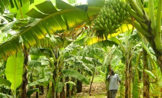 BoI supports agro processors with N5bn loan