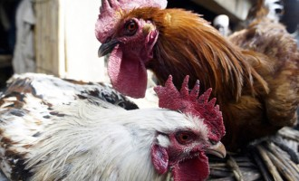 Hong Kong suspends import of poultry products from France over bird flu