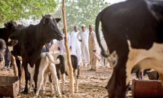 Buhari visits his Katsina farm
