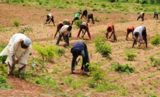 Thank Farm It's Friday! Benue workers get Fridays off to farm
