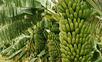 Agriculture — key to sustainable development in Nigeria
