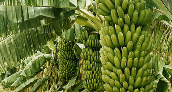 Agric revolution in Ogun and agro empire input