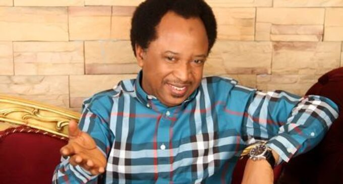 'Your afro hair could benefit from it' — Sowore hits Shehu Sani for kicking against legalisation of marijuana