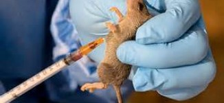Death toll from Lassa fever rises to 57