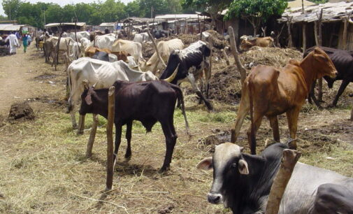 Troops 'kill' 12 cattle rustlers in the north-west
