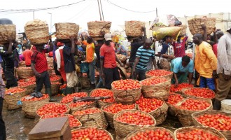 Erisco asks FG to release forex to end tomato scarcity