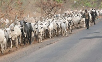 Benue court jails three herdsmen