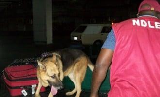 Three NDLEA officials shot dead in Kogi