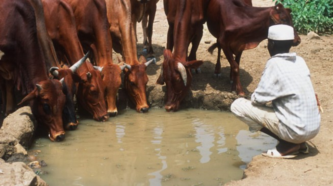 Taraba governor says anti-grazing law not targeted at anyone