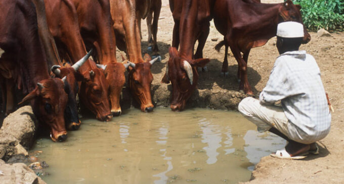 ALERT: Bill to 'forcibly' take land from Nigerians for grazing still alive