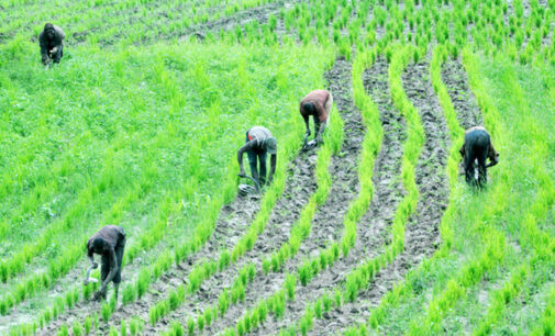 NIRSAL supports 2,987 farmers with supplies in Borno