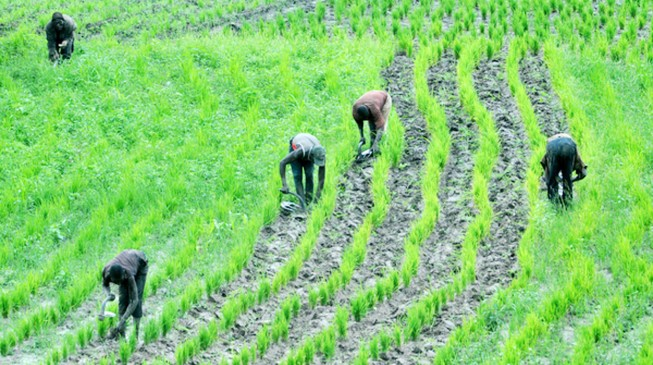 Imo civil servants will now work for 3 days, and spend 2 days in farm