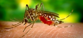 Twenty-nine people die of yellow fever in Bauchi