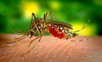 Death toll rises from 16 to 20 in Ebonyi yellow fever outbreak