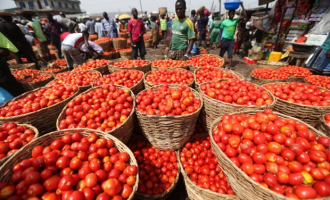 Dangote tomato factory to resume production in February