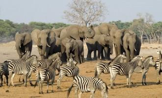 Drought forces Zimbabwe to put wild animals on sale
