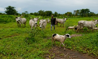 Reps to Buhari: Compel security agencies to implement Benue's anti-grazing law