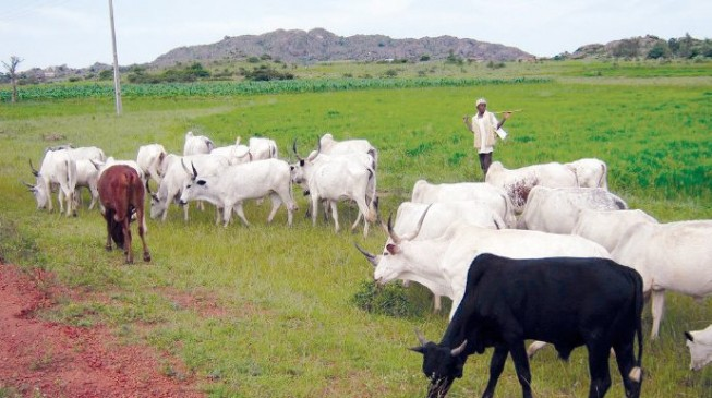 Understanding farmers-herdsmen conflict and the way forward