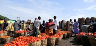 Northern traders lift blockade on perishable food supply to south