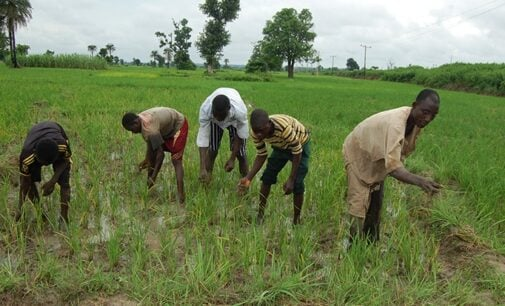 CBN: Beneficiaries of our agric interventions have received N1.48trn