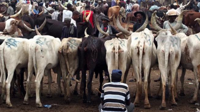 EXTRA: Zamfara to spend N83m on Sallah cows