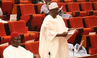 Senate reintroduces peace corps bill