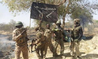 Army 'recovers' Shekau's Quran, flag from Sambisa