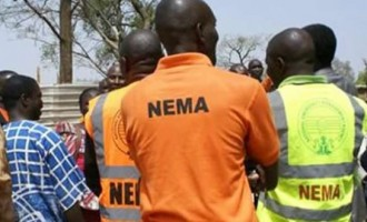 NEMA's impactful outing in the northeast