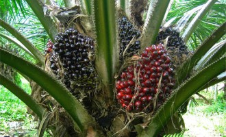 Okomu Oil Palm expects to keep profit stable at full year