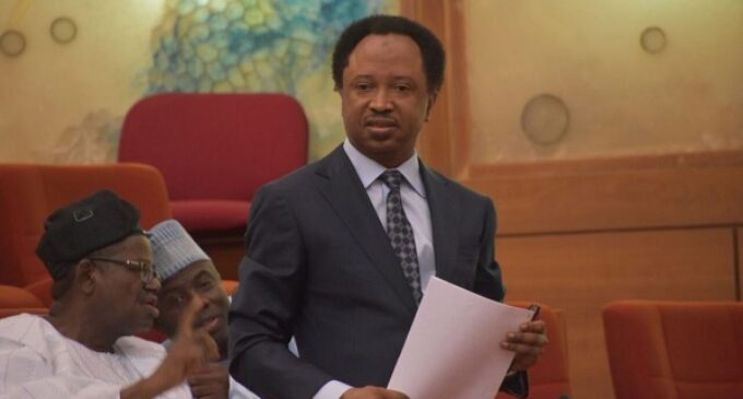 Shehu Sani: Senators can't confront Buhari on killings because they want to be re-elected
