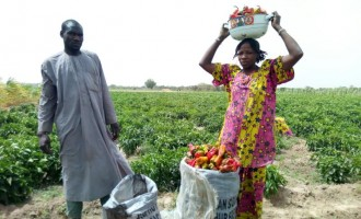 FAO empowers 200,000 IDP farmers, says 'time to act is now'