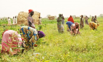 Yobe, World Bank empower IDPs to invest in agriculture