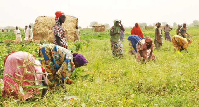 A memo from Rwanda: Who needs able-bodied men for agriculture?