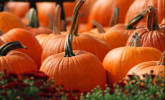Eat Me: Enhances vision, aids sleep… Six health benefits of pumpkin