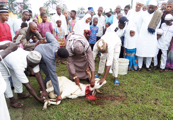Deputy Imam of Warri, Alhaji Tinau Aminu slaughtering a ram during the Eid el-Kabir celebration at Warri Naval Base in Delta