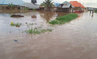 Flood destroys 300 houses in Daura