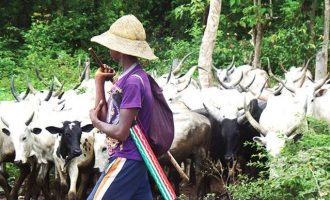 Ortom: Over one million cows invaded Benue — despite ongoing army operation