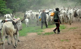 Nigeria's helmsman and his herdsmen