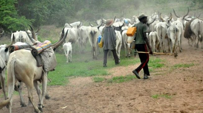 Ex-naval chief: Police say it's difficult to arrest 'highly placed' herdsmen sponsors