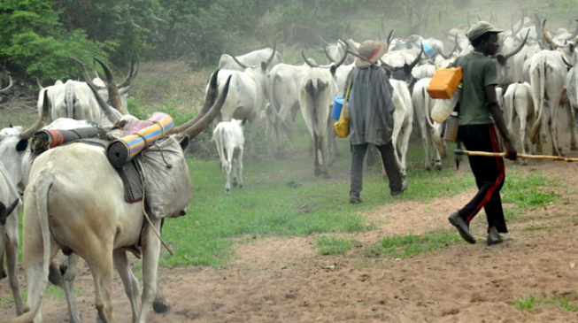 CSOs: Those who killed a herdsman were arrested but killer herdsmen still on the prowl