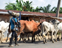 25 killed as 'herdsmen' invade Kogi communities