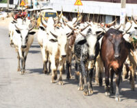 Miyetti Allah vows to resist Benue anti-grazing law, asks Buhari to warn Ortom