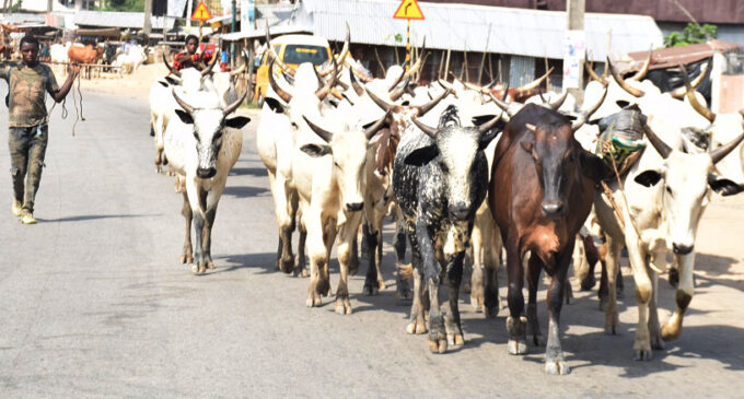 No cattle 'roaming', five-year jail term… what to know about the grazing law 'tearing Benue apart'