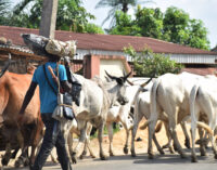 Tension in Jigawa community over invasion of 'armed herders'