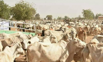 The promised land of Ruga: A time bomb