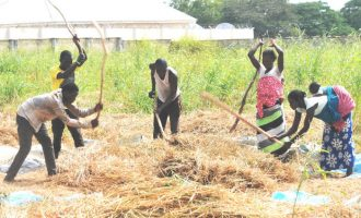 Here's why Nigeria overtook Egypt in rice production