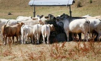Ruga settlements delivered by 'Nigeria Air'